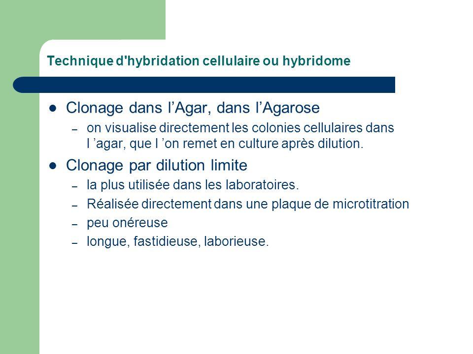 Technique d'hybridation cellulaire ou hybridome Clonage dans lAgar, dans lAgarose – on visualise directement les colonies cellulaires dans l agar, que