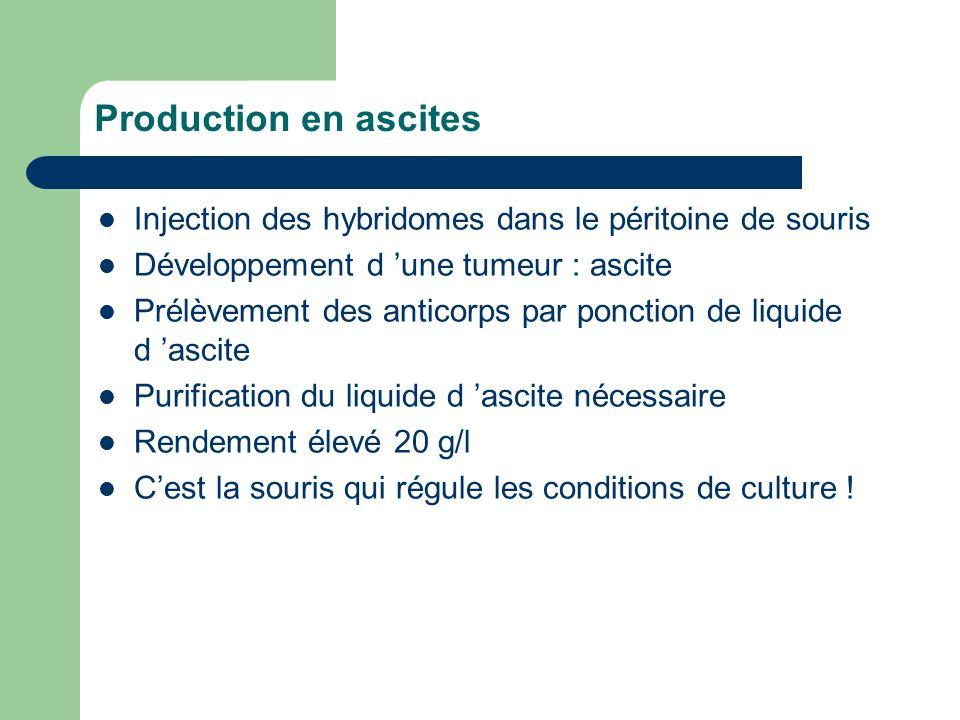 Production en ascites Injection des hybridomes dans le péritoine de souris Développement d une tumeur : ascite Prélèvement des anticorps par ponction