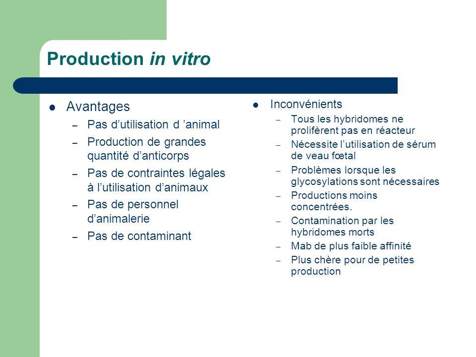 Production in vitro Avantages – Pas dutilisation d animal – Production de grandes quantité danticorps – Pas de contraintes légales à lutilisation dani