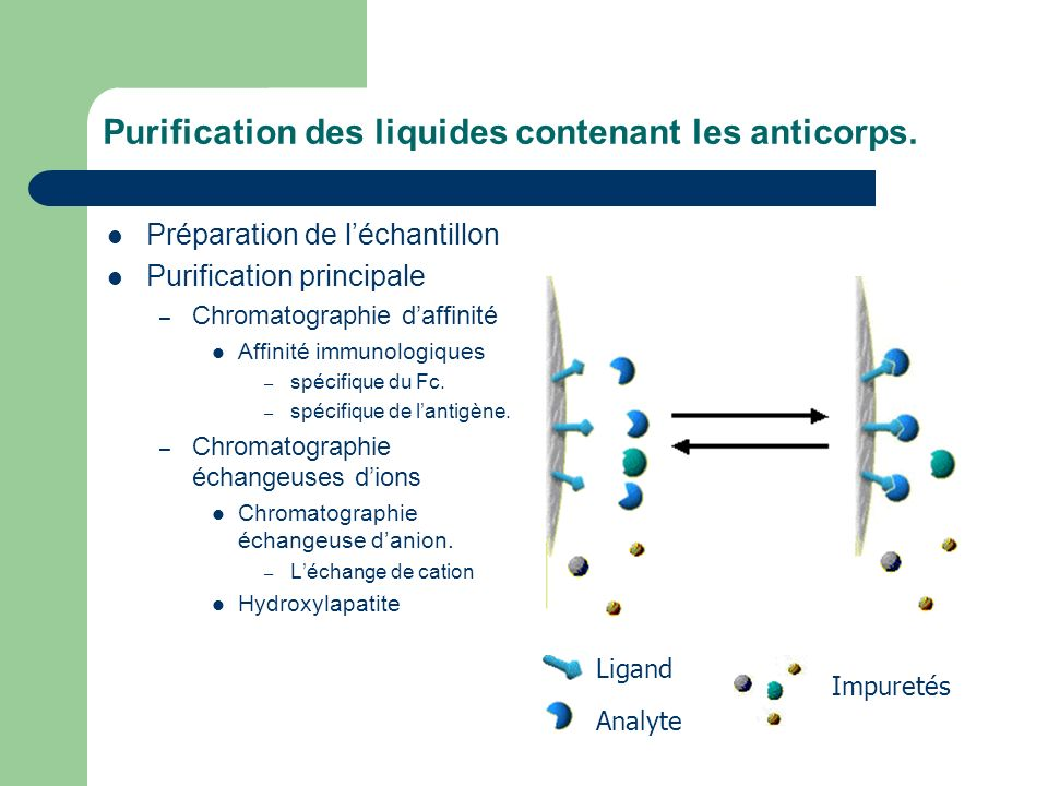Purification des liquides contenant les anticorps. Préparation de léchantillon Purification principale – Chromatographie daffinité Affinité immunologi
