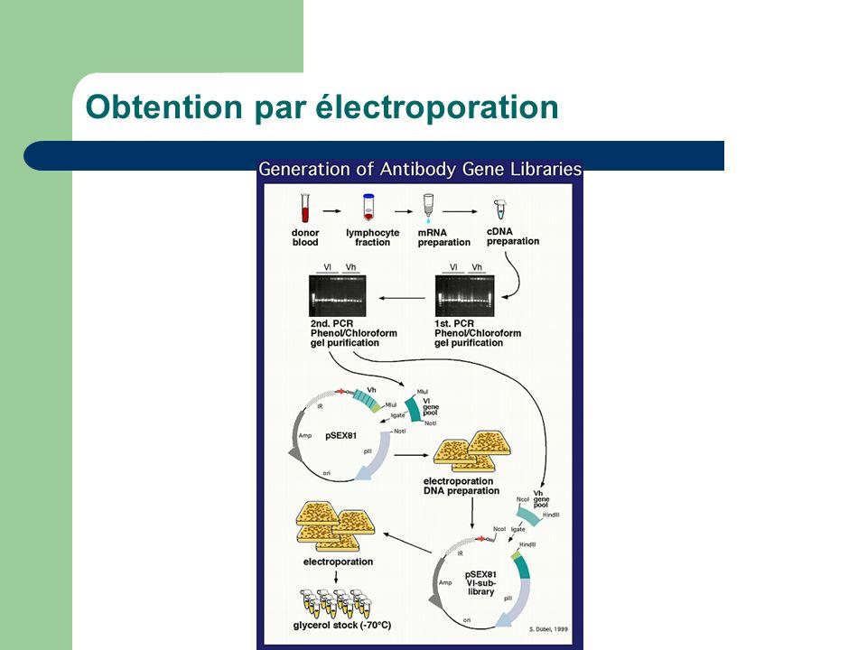 Obtention par électroporation