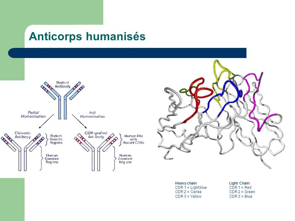 Anticorps humanisés Heavy chain CDR 1 = Light blue CDR 2 = Cerise CDR 3 = Yellow Light Chain CDR 1 = Red CDR 2 = Green CDR 3 = Blue