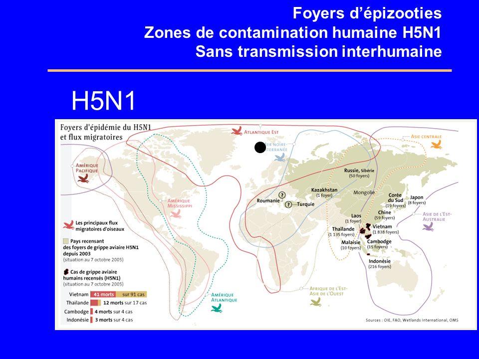 Foyers dépizooties Zones de contamination humaine H5N1 Sans transmission interhumaine H5N1