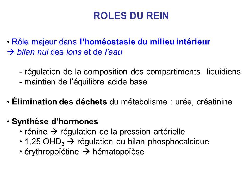 ROLES DU REIN Rôle majeur dans lhoméostasie du milieu intérieur bilan nul des ions et de leau - régulation de la composition des compartimentsliquidiens - maintien de léquilibre acide base Élimination des déchets du métabolisme : urée, créatinine Synthèse dhormones rénine régulation de la pression artérielle 1,25 OHD 3 régulation du bilan phosphocalcique érythropoïétine hématopoïèse