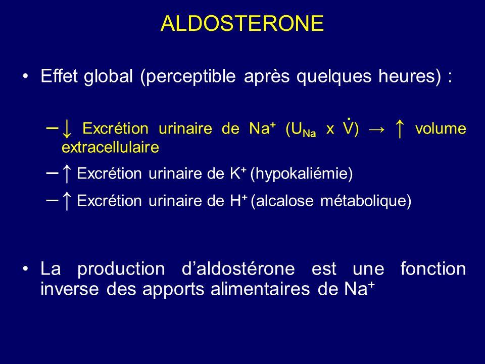 ALDOSTERONE Effet global (perceptible après quelques heures) : – Excrétion urinaire de Na + (U Na x V) volume extracellulaire – Excrétion urinaire de K + (hypokaliémie) – Excrétion urinaire de H + (alcalose métabolique) La production daldostérone est une fonction inverse des apports alimentaires de Na +.