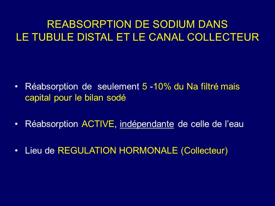 REABSORPTION DE SODIUM DANS LE TUBULE DISTAL ET LE CANAL COLLECTEUR Réabsorption de seulement 5 -10% du Na filtré mais capital pour le bilan sodé Réabsorption ACTIVE, indépendante de celle de leau Lieu de REGULATION HORMONALE (Collecteur)