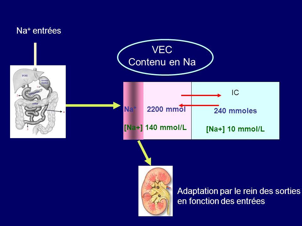 IC 240 mmoles [Na+] 10 mmol/L EC Na + entrées Adaptation par le rein des sorties en fonction des entrées Na + 2200 mmol [Na+] 140 mmol/L VEC Contenu en Na