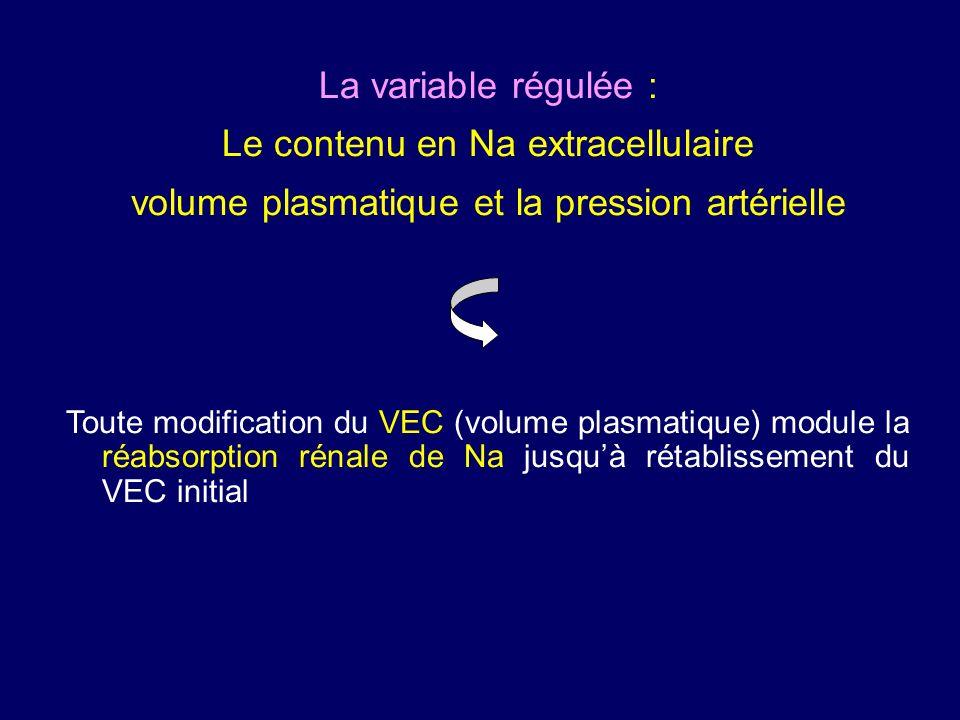 La variable régulée : Le contenu en Na extracellulaire volume plasmatique et la pression artérielle Toute modification du VEC (volume plasmatique) module la réabsorption rénale de Na jusquà rétablissement du VEC initial
