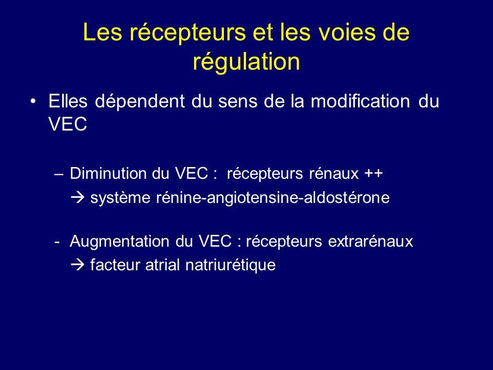 Les récepteurs et les voies de régulation Elles dépendent du sens de la modification du VEC –Diminution du VEC : récepteurs rénaux ++ système rénine-angiotensine-aldostérone -Augmentation du VEC : récepteurs extrarénaux facteur atrial natriurétique