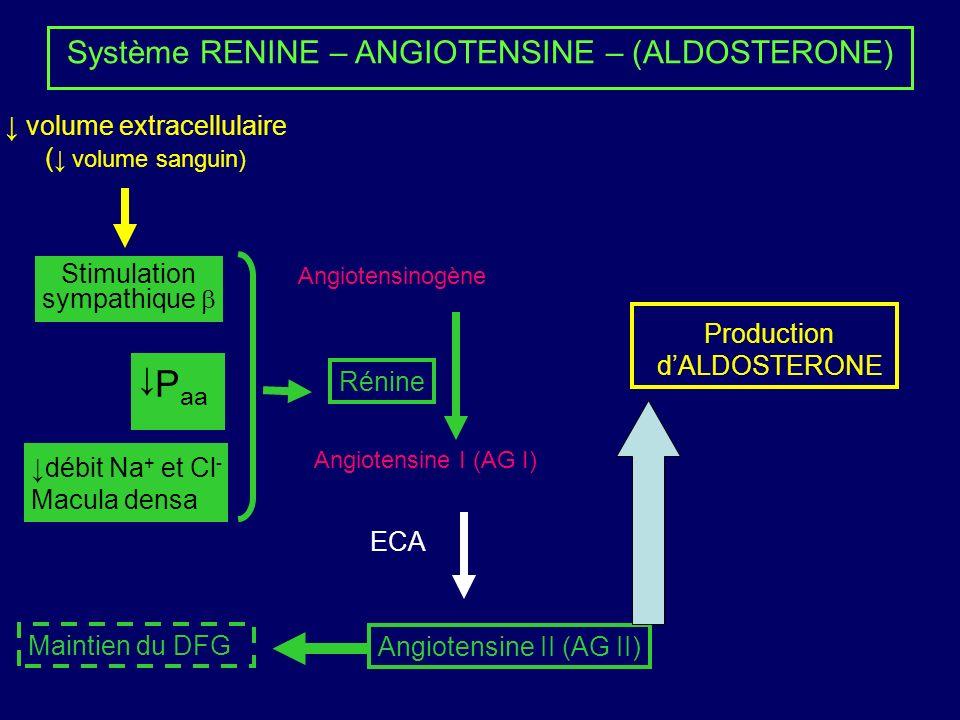Système RENINE – ANGIOTENSINE – (ALDOSTERONE) Angiotensinogène Angiotensine I (AG I) Angiotensine II (AG II) Rénine ECA P aa Stimulation sympathique débit Na + et Cl - Macula densa Production dALDOSTERONE Maintien du DFG volume extracellulaire ( volume sanguin)