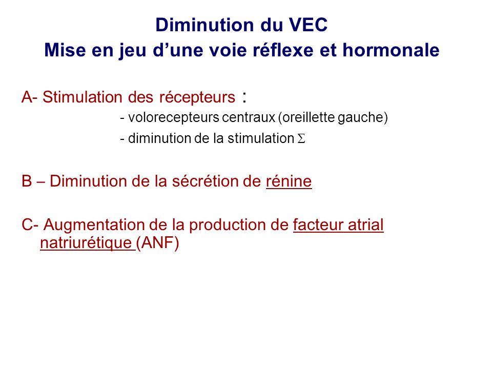 Diminution du VEC Mise en jeu dune voie réflexe et hormonale A- Stimulation des récepteurs : - volorecepteurs centraux (oreillette gauche) - diminution de la stimulation B – Diminution de la sécrétion de rénine C- Augmentation de la production de facteur atrial natriurétique (ANF)