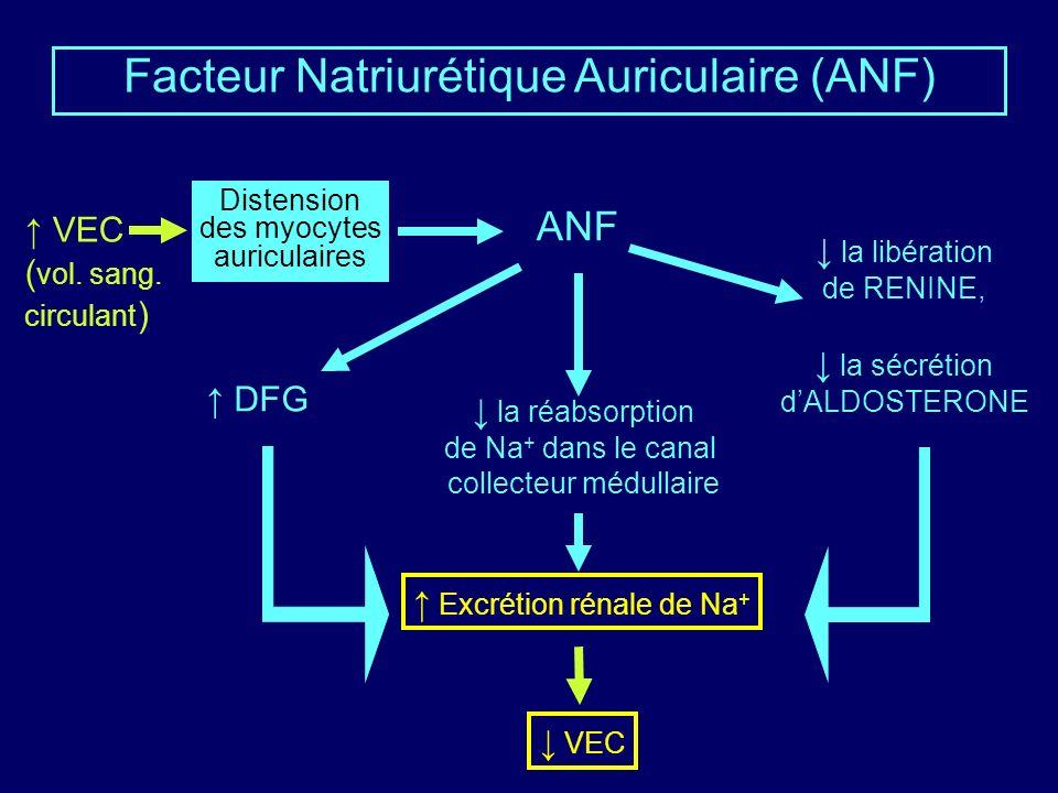 Facteur Natriurétique Auriculaire (ANF) ANF Distension des myocytes auriculaires la libération de RENINE, la sécrétion dALDOSTERONE DFG la réabsorption de Na + dans le canal collecteur médullaire VEC ( vol.