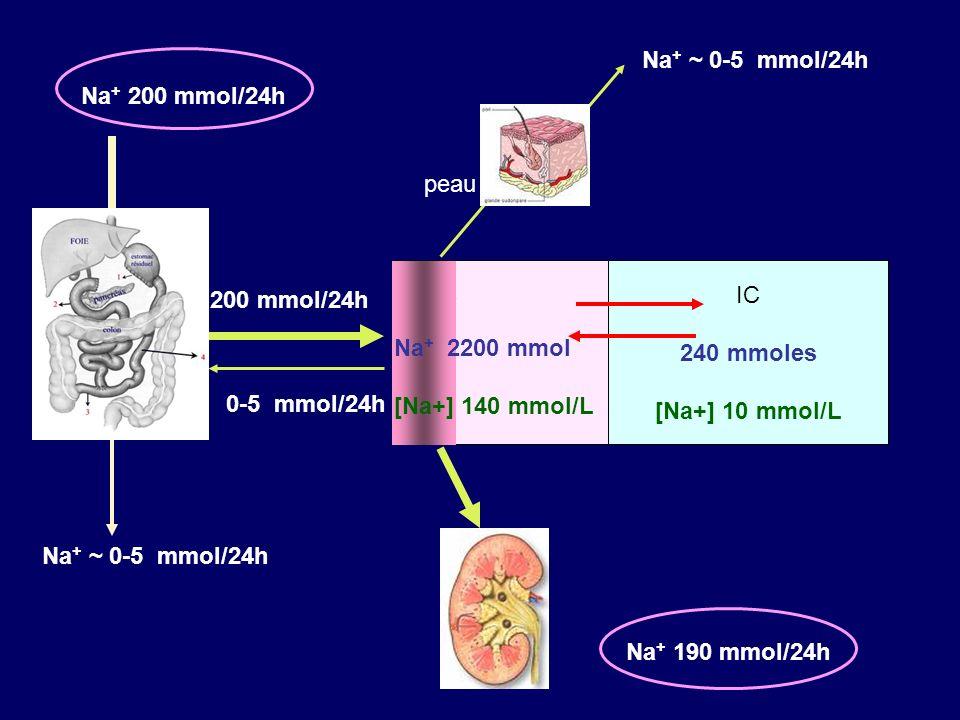SORTIES RENALES du SODIUM Filtration Débit filtré de Na = [Na + ] UF x DFG 25 000 mmol/24h Réabsorption tubulaire > 99% du débit filtré –Active, transcellulaire.