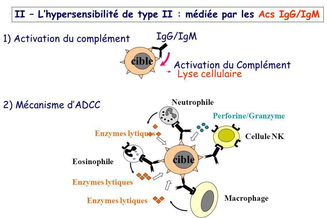 cible IgG/IgM Activation du Complément Lyse cellulaire Cellule NK Neutrophile Eosinophile cible Perforine/Granzyme Enzymes lytiques Macrophage Enzymes