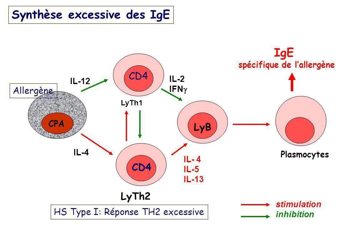 Synthèse excessive des IgE CPA LyTh1 LyTh2 Plasmocytes IgE spécifique de lallergène stimulation inhibition IL-12 IL-2 IFN IL- 4 IL-5 IL-13 IL-4 CD4 Ly