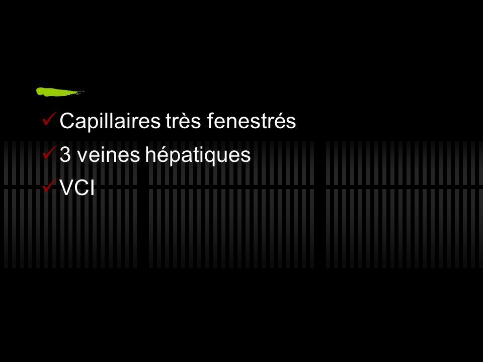 Capillaires très fenestrés 3 veines hépatiques VCI