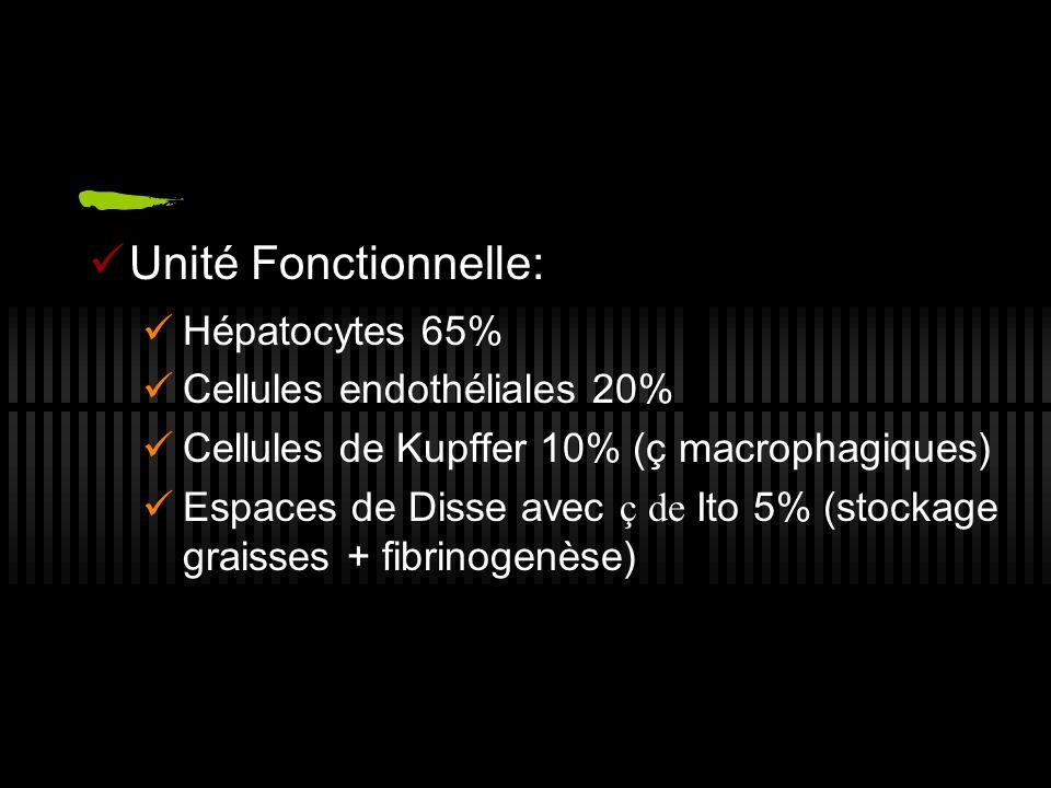 Unité Fonctionnelle: Hépatocytes 65% Cellules endothéliales 20% Cellules de Kupffer 10% (ç macrophagiques) Espaces de Disse avec ç de Ito 5% (stockage