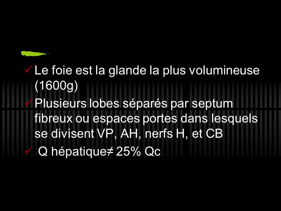 Le foie est la glande la plus volumineuse (1600g) Plusieurs lobes séparés par septum fibreux ou espaces portes dans lesquels se divisent VP, AH, nerfs