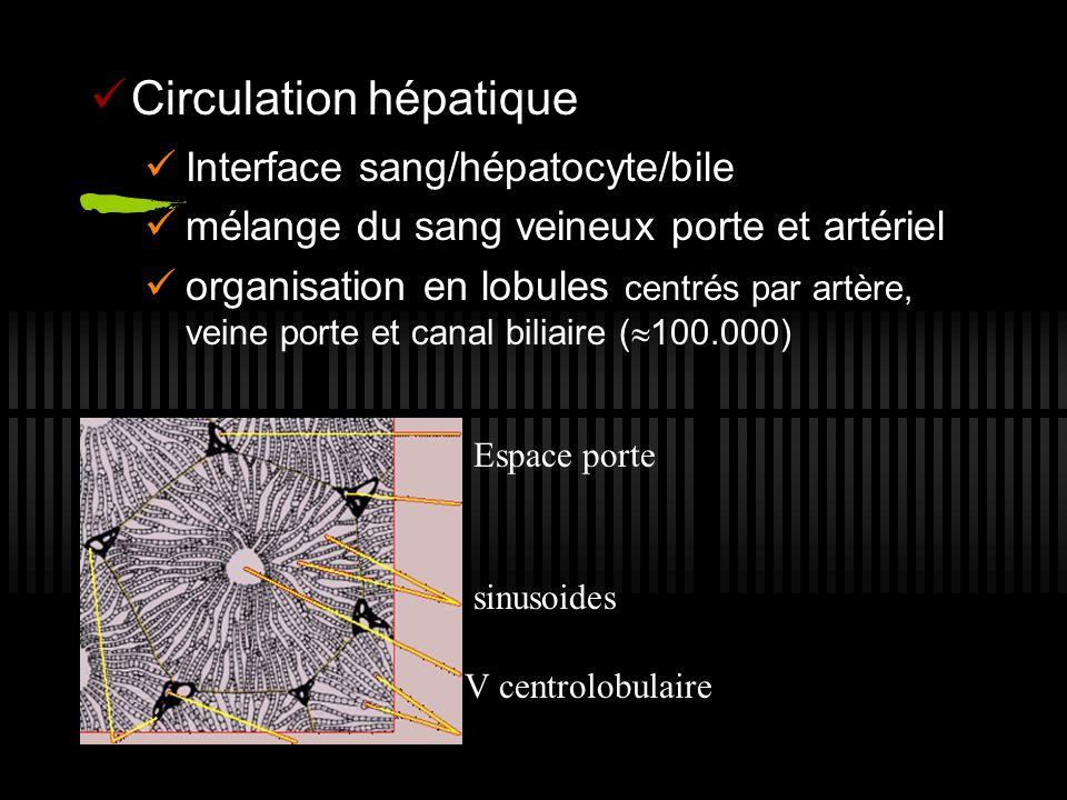 Circulation hépatique Interface sang/hépatocyte/bile mélange du sang veineux porte et artériel organisation en lobules centrés par artère, veine porte