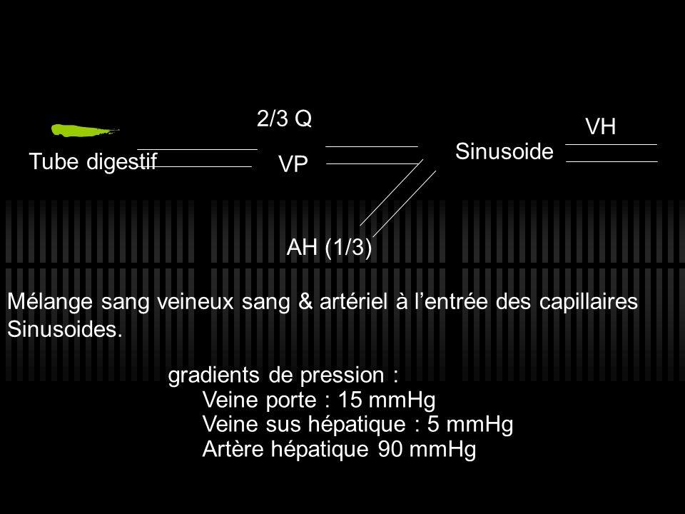 Tube digestif VP 2/3 Q Sinusoide AH (1/3) Mélange sang veineux sang & artériel à lentrée des capillaires Sinusoides. VH gradients de pression : Veine