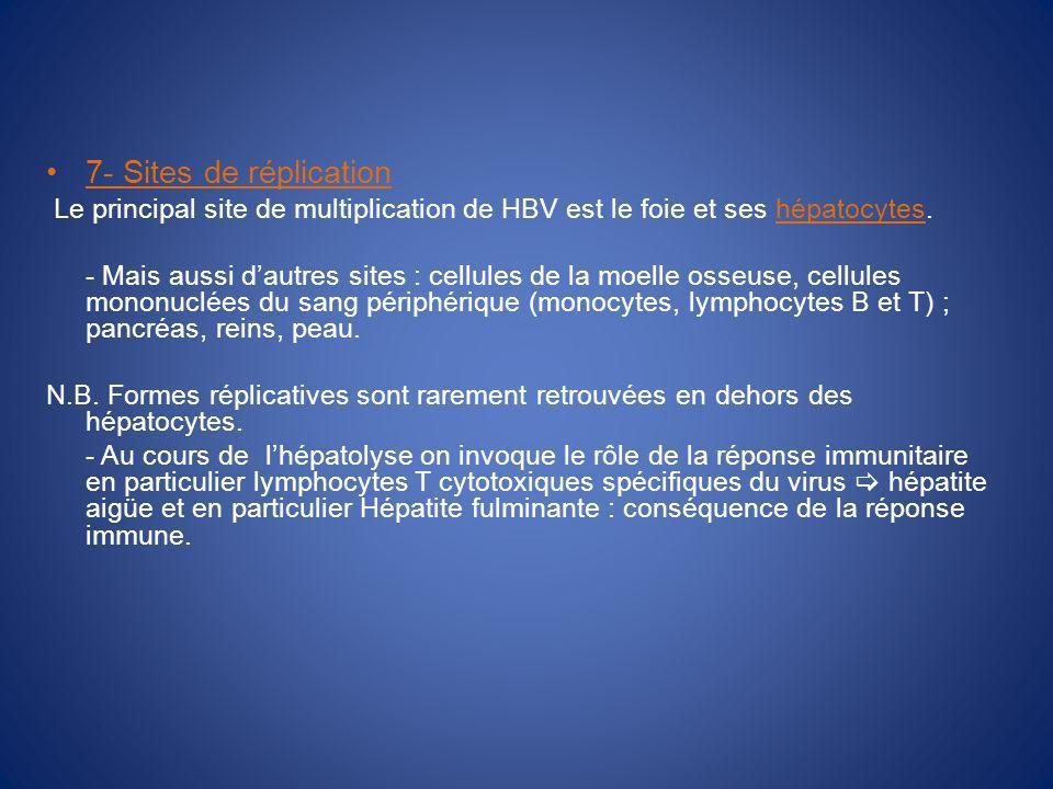 7- Sites de réplication Le principal site de multiplication de HBV est le foie et ses hépatocytes.