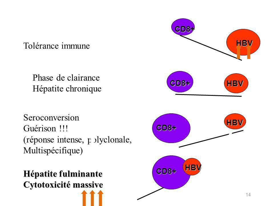 14 Tolérance immune Phase de clairance Hépatite chronique Seroconversion Guérison !!.