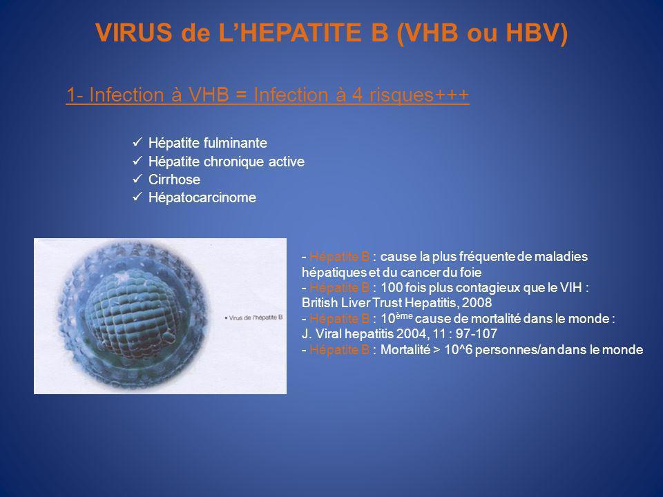 VIRUS de LHEPATITE B (VHB ou HBV) 1- Infection à VHB = Infection à 4 risques+++ Hépatite fulminante Hépatite chronique active Cirrhose Hépatocarcinome - Hépatite B : cause la plus fréquente de maladies hépatiques et du cancer du foie - Hépatite B : 100 fois plus contagieux que le VIH : British Liver Trust Hepatitis, 2008 - Hépatite B : 10 ème cause de mortalité dans le monde : J.