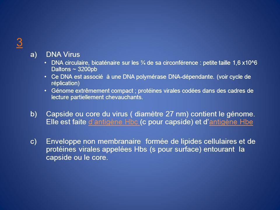 3 a)DNA Virus DNA circulaire, bicaténaire sur les ¾ de sa circonférence : petite taille 1,6 x10^6 Daltons ~ 3200pb Ce DNA est associé à une DNA polymérase DNA-dépendante.