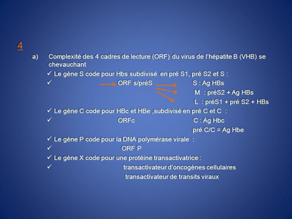 4 a)Complexité des 4 cadres de lecture (ORF) du virus de lhépatite B (VHB) se chevauchant Le gène S code pour Hbs subdivisé en pré S1, pré S2 et S : ORF s/préS S : Ag HBs M : préS2 + Ag HBs L : préS1 + pré S2 + HBs Le gène C code pour HBc et HBe,subdivisé en pré C et C : ORFc C : Ag Hbc pré C/C = Ag Hbe Le gène P code pour la DNA polymérase virale : ORF P Le gène X code pour une protéine transactivatrice : transactivateur doncogènes cellulaires transactivateur de transits viraux 4 a)Complexité des 4 cadres de lecture (ORF) du virus de lhépatite B (VHB) se chevauchant Le gène S code pour Hbs subdivisé en pré S1, pré S2 et S : ORF s/préS S : Ag HBs M : préS2 + Ag HBs L : préS1 + pré S2 + HBs Le gène C code pour HBc et HBe,subdivisé en pré C et C : ORFc C : Ag Hbc pré C/C = Ag Hbe Le gène P code pour la DNA polymérase virale : ORF P Le gène X code pour une protéine transactivatrice : transactivateur doncogènes cellulaires transactivateur de transits viraux
