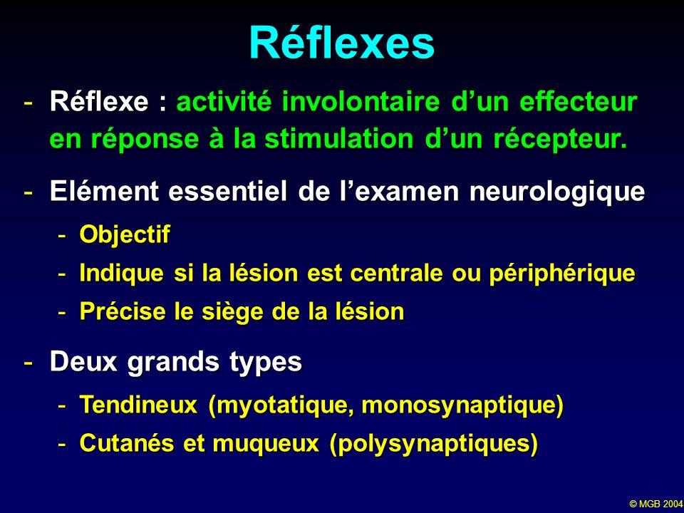 © MGB 2004 Réflexes -Réflexe : activité involontaire dun effecteur en réponse à la stimulation dun récepteur. -Elément essentiel de lexamen neurologiq
