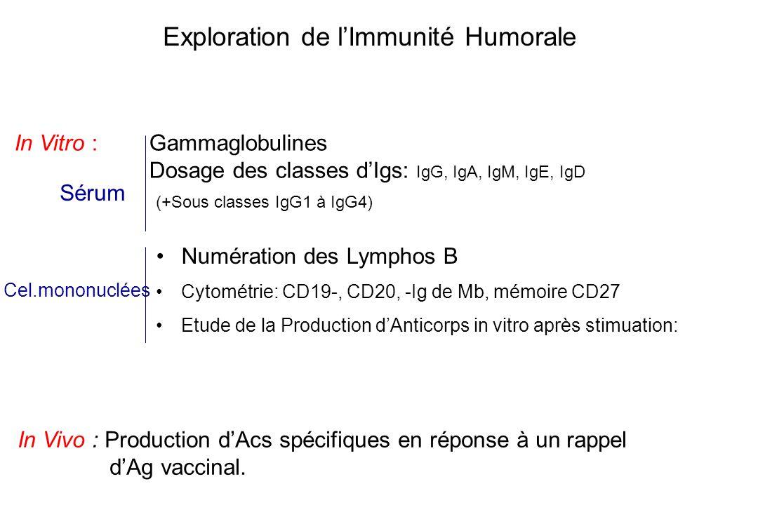 Exploration de lImmunité Humorale In Vitro : Gammaglobulines Dosage des classes dIgs: IgG, IgA, IgM, IgE, IgD In Vivo : Production dAcs spécifiques en