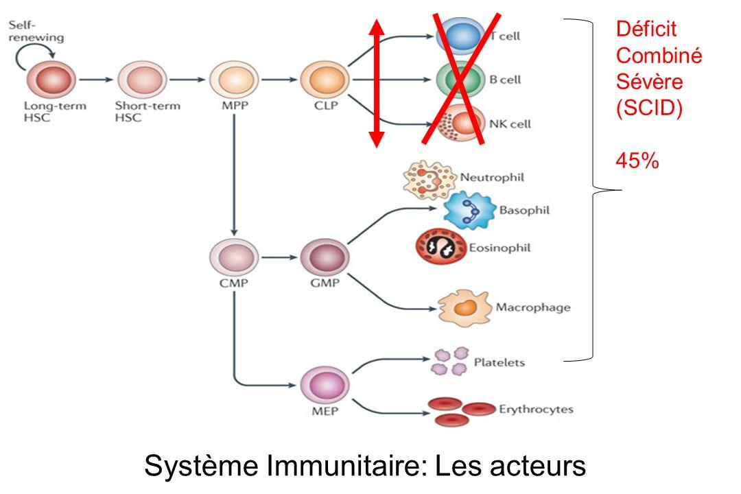 Système Immunitaire: Les acteurs Déficit Combiné Sévère (SCID) 45%