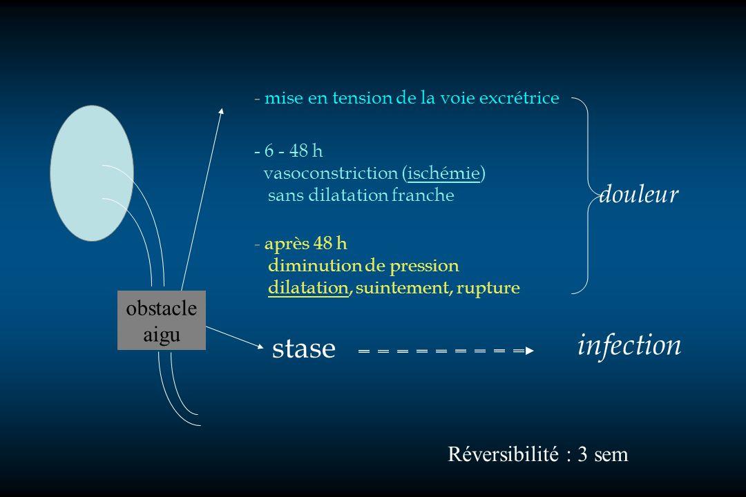 stase - mise en tension de la voie excrétrice - 6 - 48 h vasoconstriction (ischémie) sans dilatation franche - après 48 h diminution de pression dilat