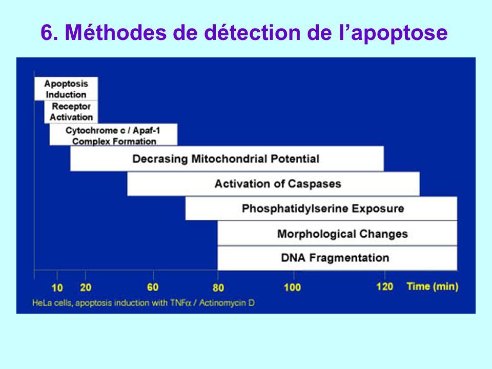 6. Méthodes de détection de lapoptose