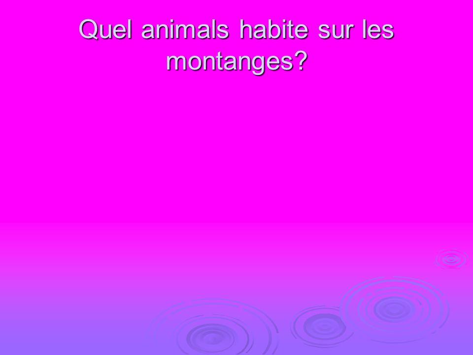 Quel animals habite sur les montanges?