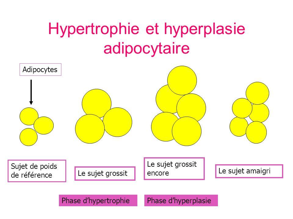 Hypertrophie et hyperplasie adipocytaire Sujet de poids de référence Adipocytes Le sujet grossit Phase dhypertrophiePhase dhyperplasie Le sujet grossit encore Le sujet amaigri