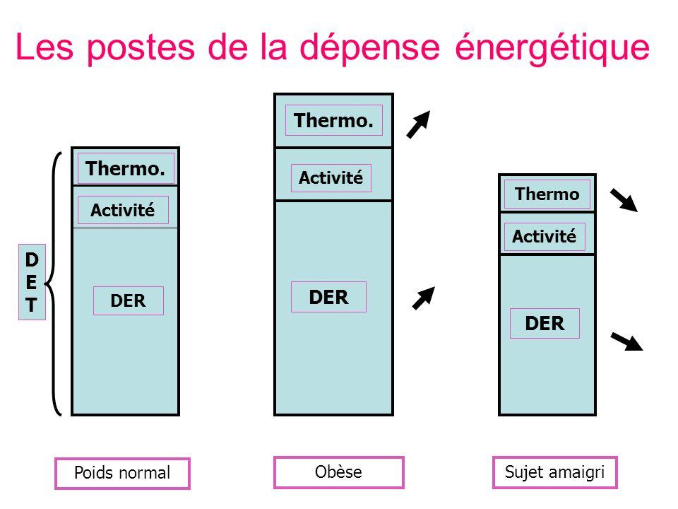 Les postes de la dépense énergétique Poids normal ObèseSujet amaigri DER Activité Thermo.