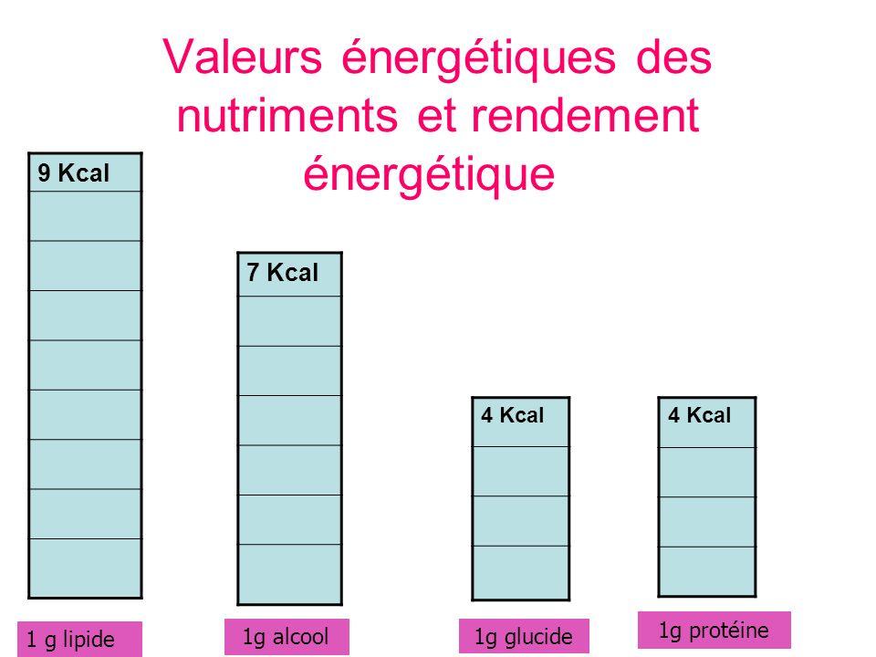 Valeurs énergétiques des nutriments et rendement énergétique 9 Kcal 7 Kcal 4 Kcal 1 g lipide 1g alcool 1g glucide 1g protéine