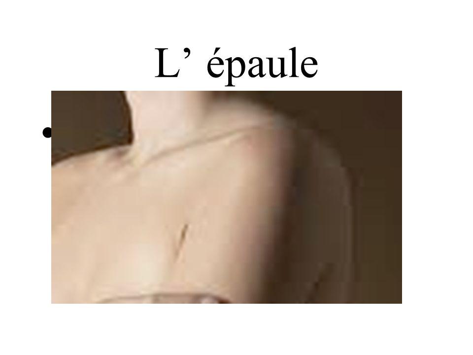 L épaule shoulder