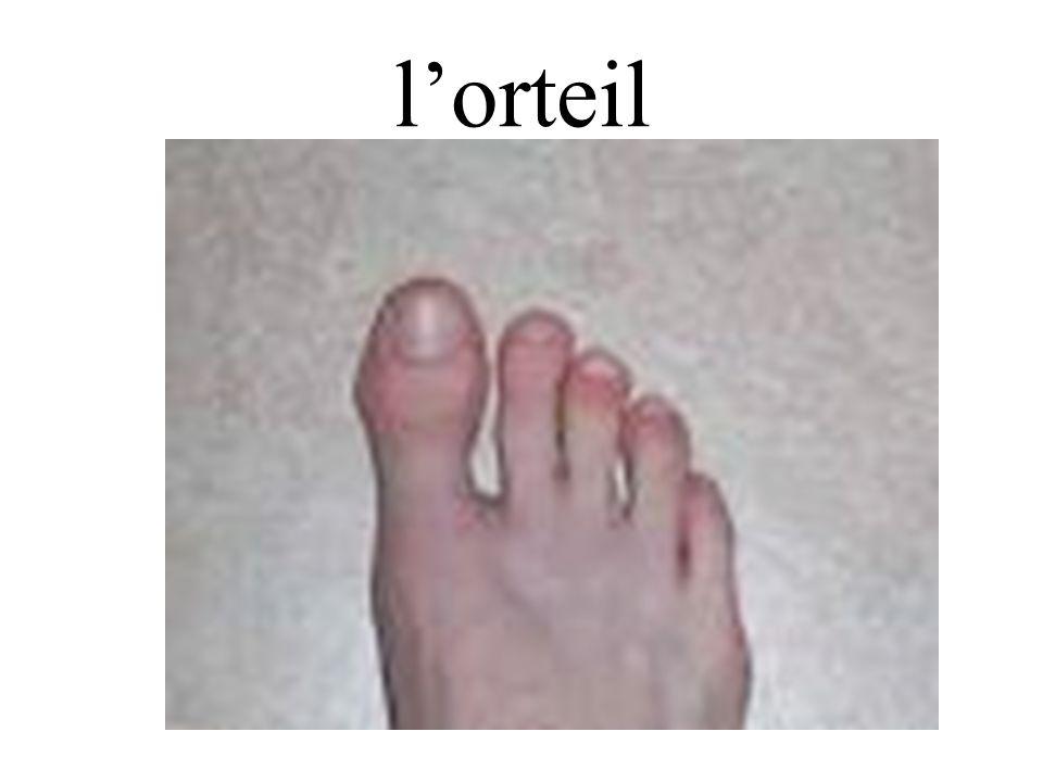 lorteil