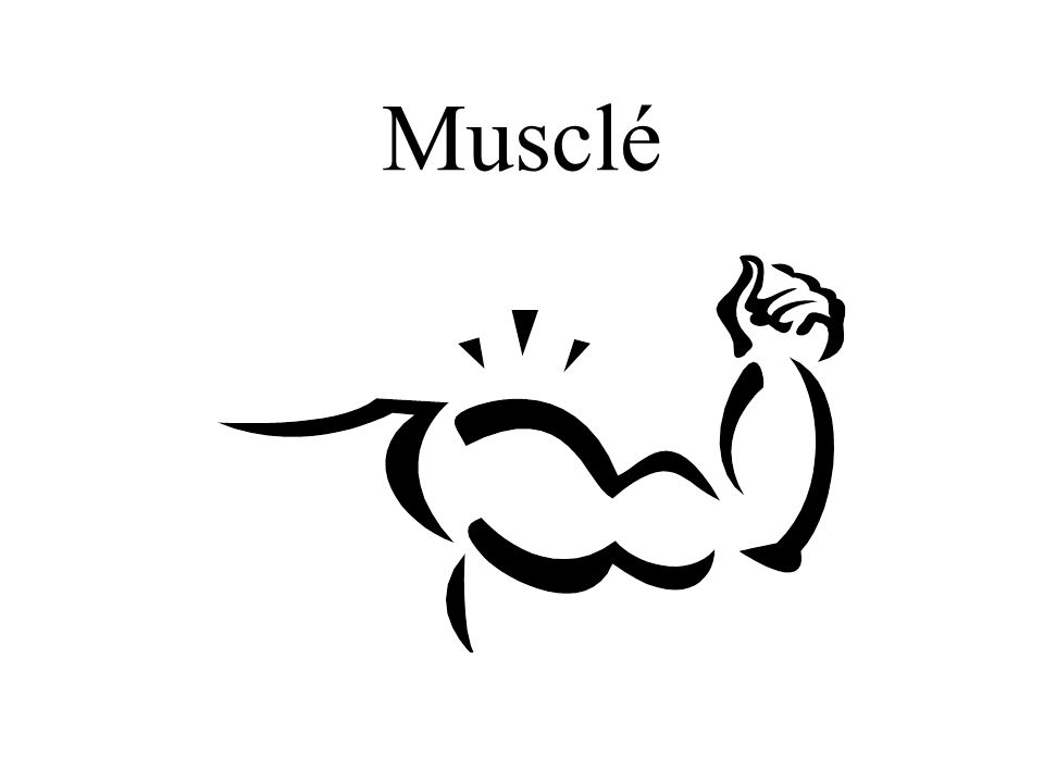 Musclé