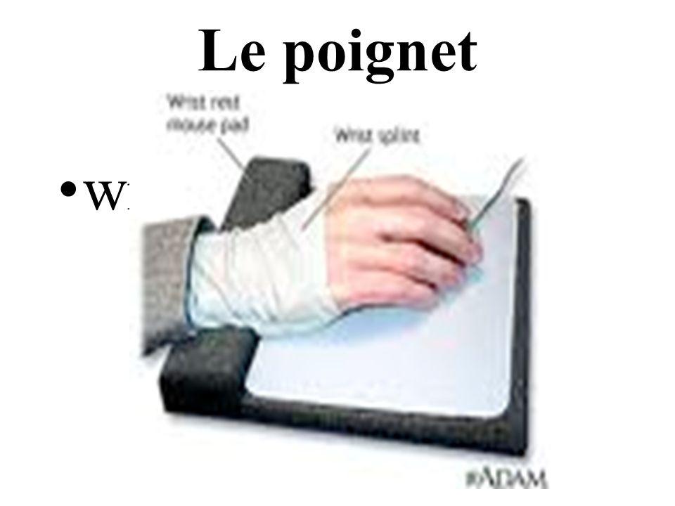 Le poignet wrist