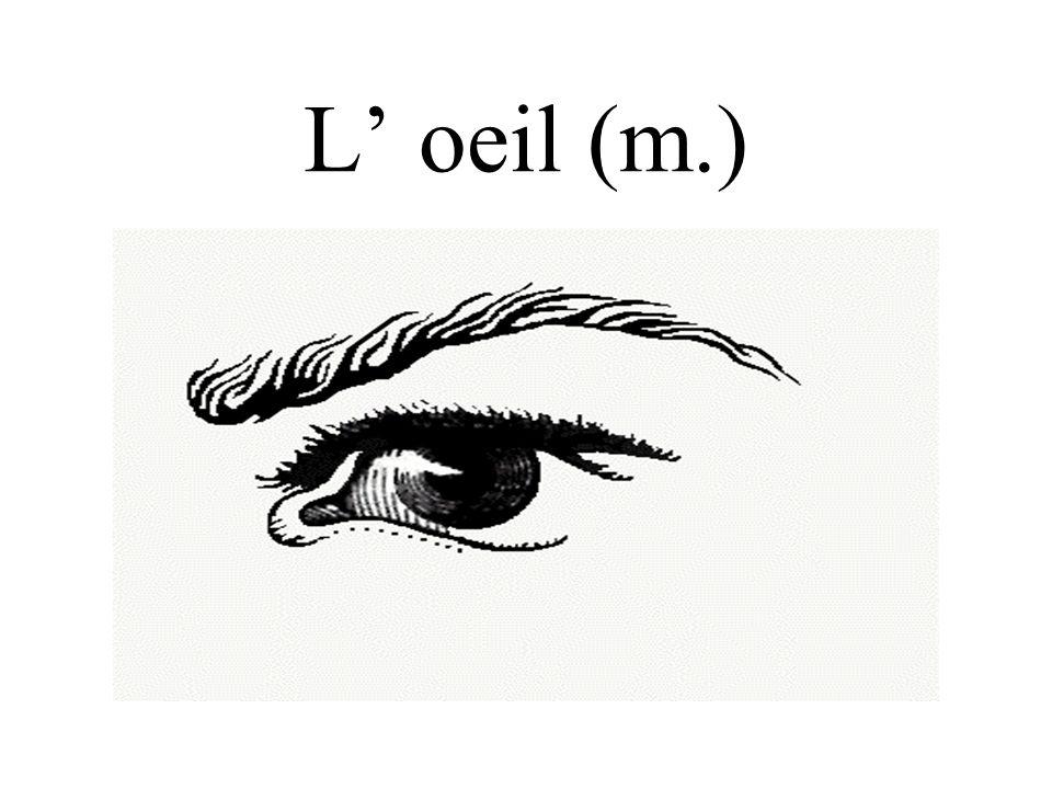 L oeil (m.)