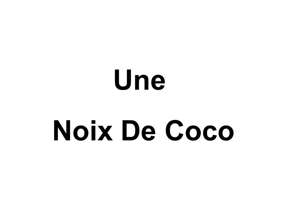 Une Noix De Coco