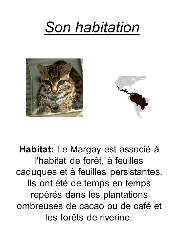 Son habitation Habitat: Le Margay est associé à l'habitat de forêt, à feuilles caduques et à feuilles persistantes. Ils ont été de temps en temps repè