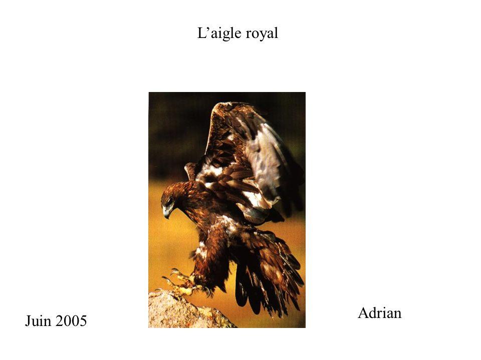 1.Description 2. Reproduction 3. Les parties de laigle royal 4.