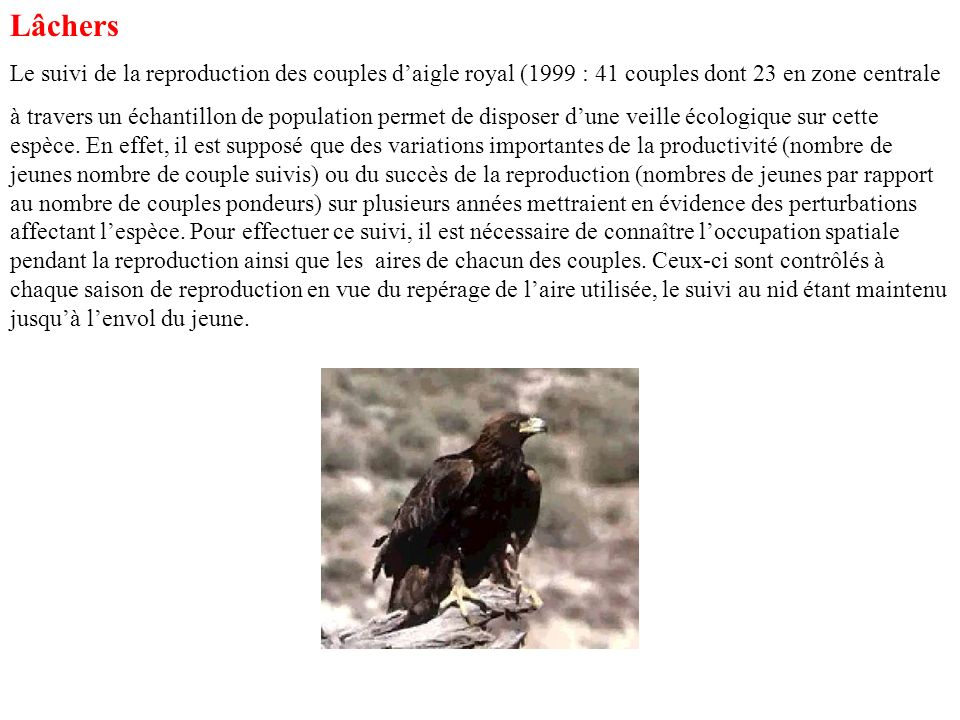 Lâchers Le suivi de la reproduction des couples daigle royal (1999 : 41 couples dont 23 en zone centrale à travers un échantillon de population permet