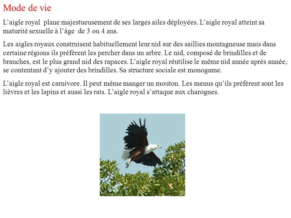 La surveillance En Europe méridionale les aigles royaux sont toujours la cible des chasseurs.