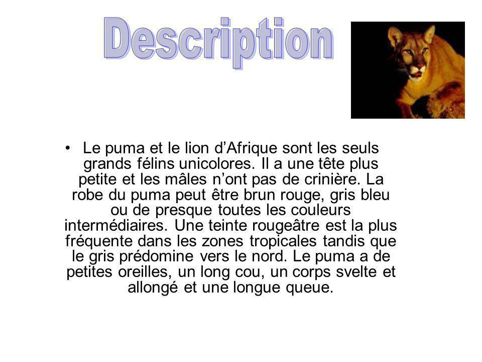 Les pumas peuvent vivre dans plusieurs endroits différents.