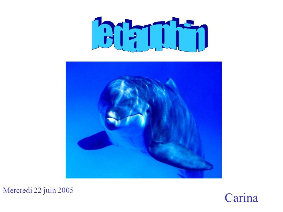 Carina Mercredi 22 juin 2005